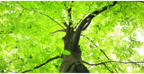 treecare-program-header