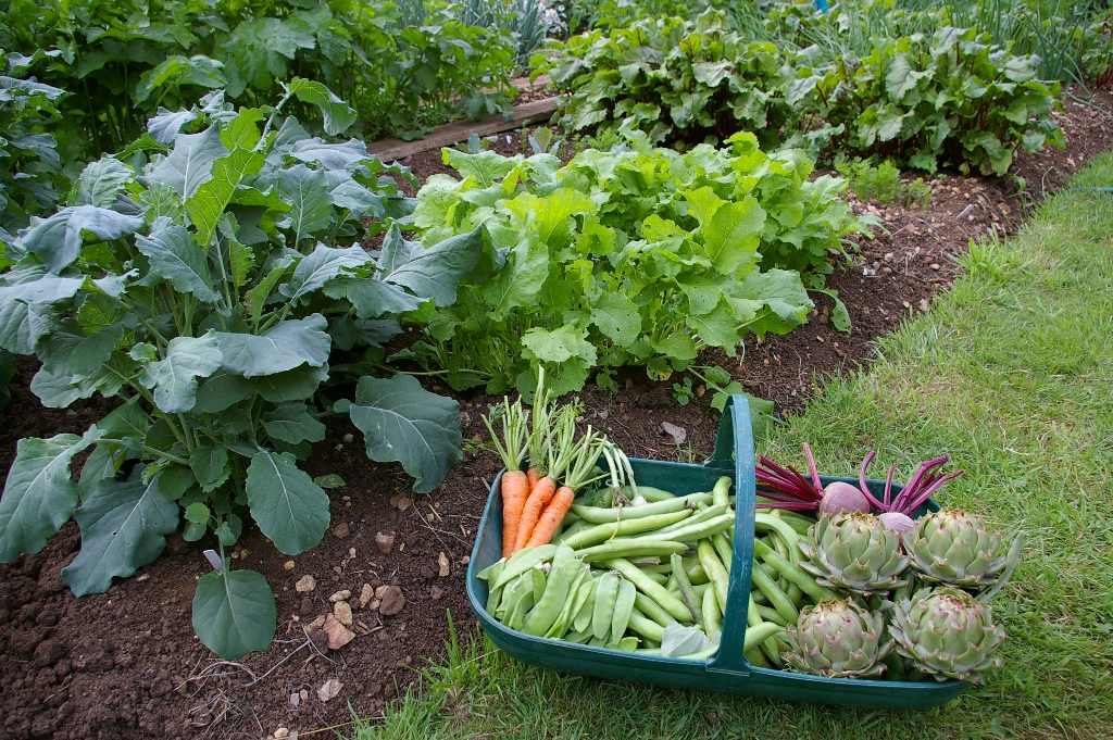 vegetable garden Tips for Planting Your First Vegetable Garden