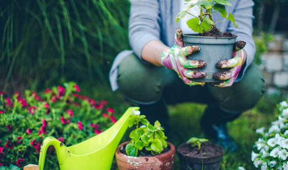 NATIONAL-GARDENING-WEEK-789779