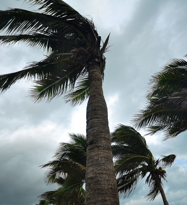 palm-trees-in-hurricane