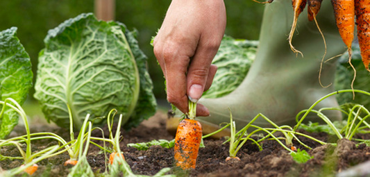 There S Nothing Quite As Rewarding Than Growing Your Own Fresh Vegetables