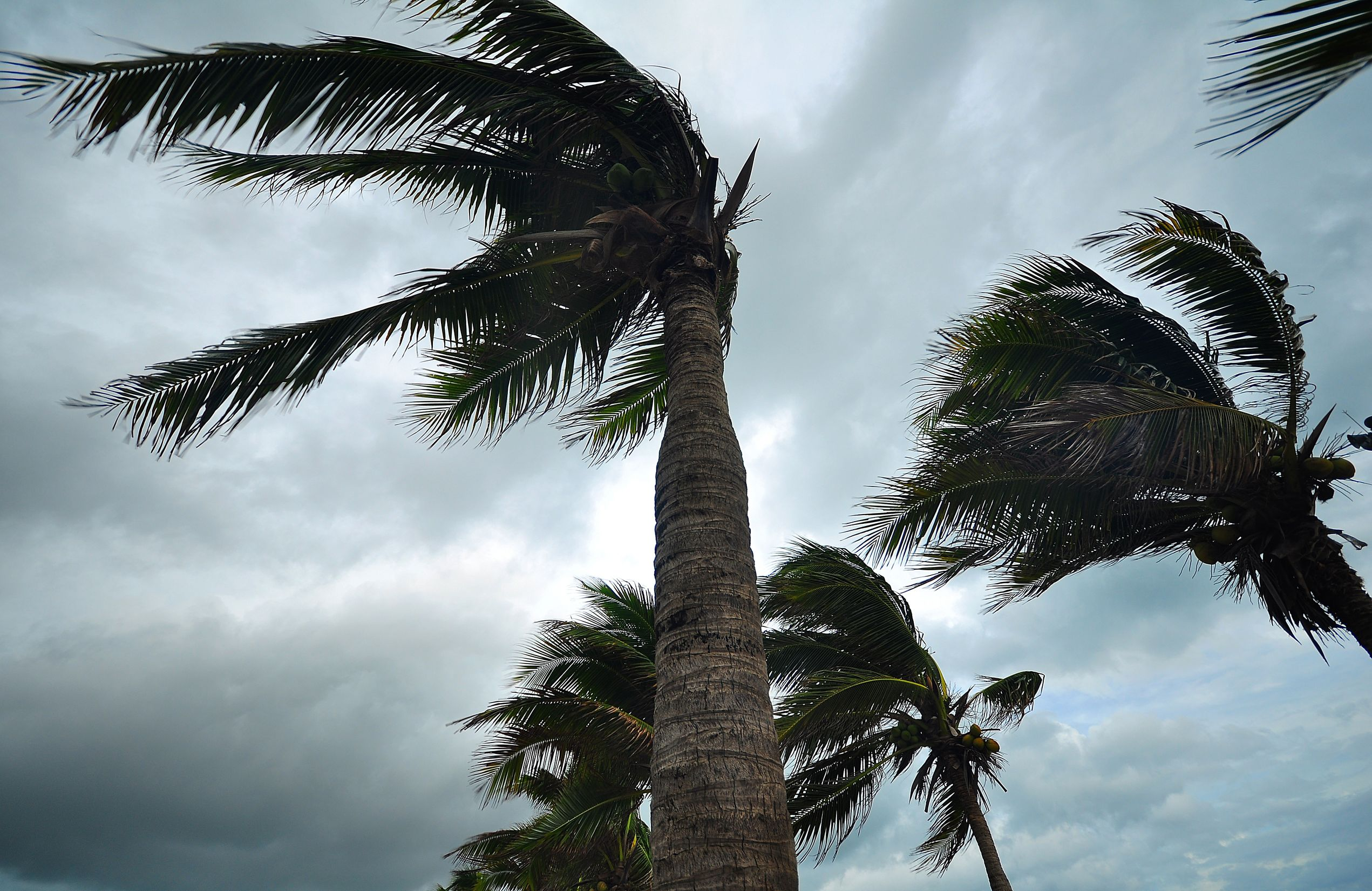 Protect Your Property During High Wind Storms
