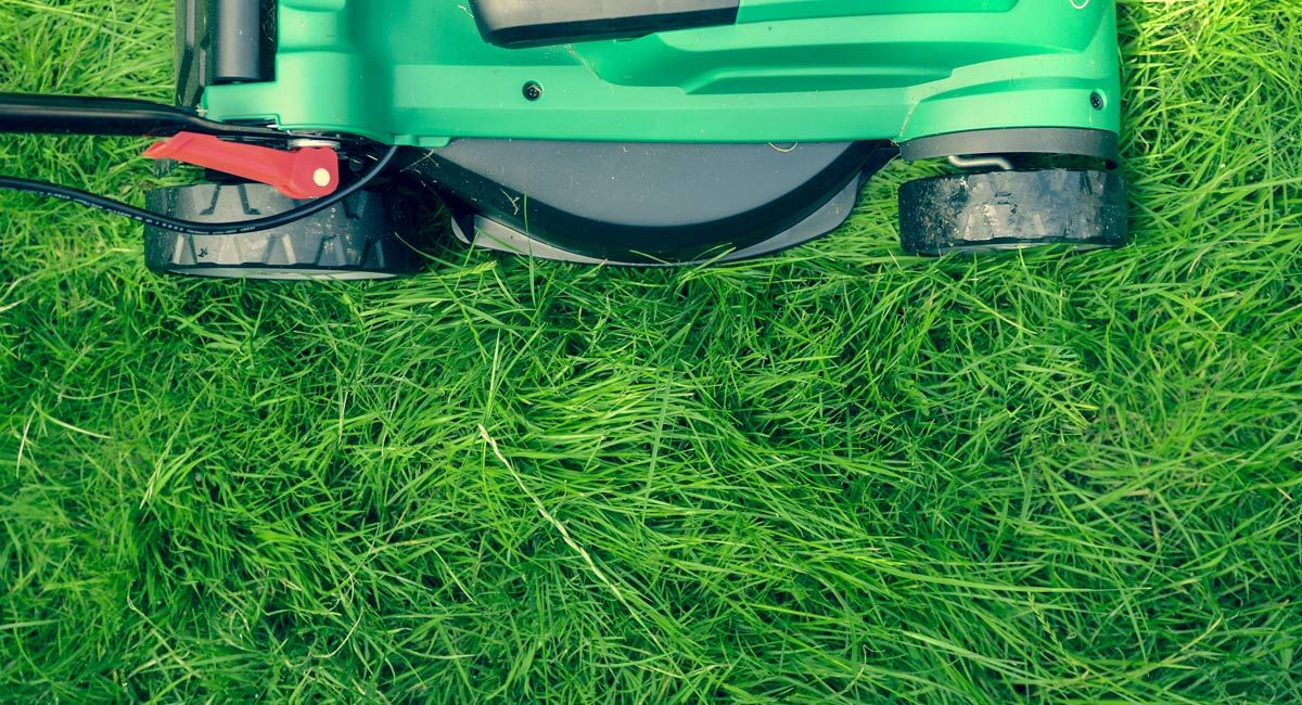 The Ultimate Guide to Eco-Friendly Lawn Care
