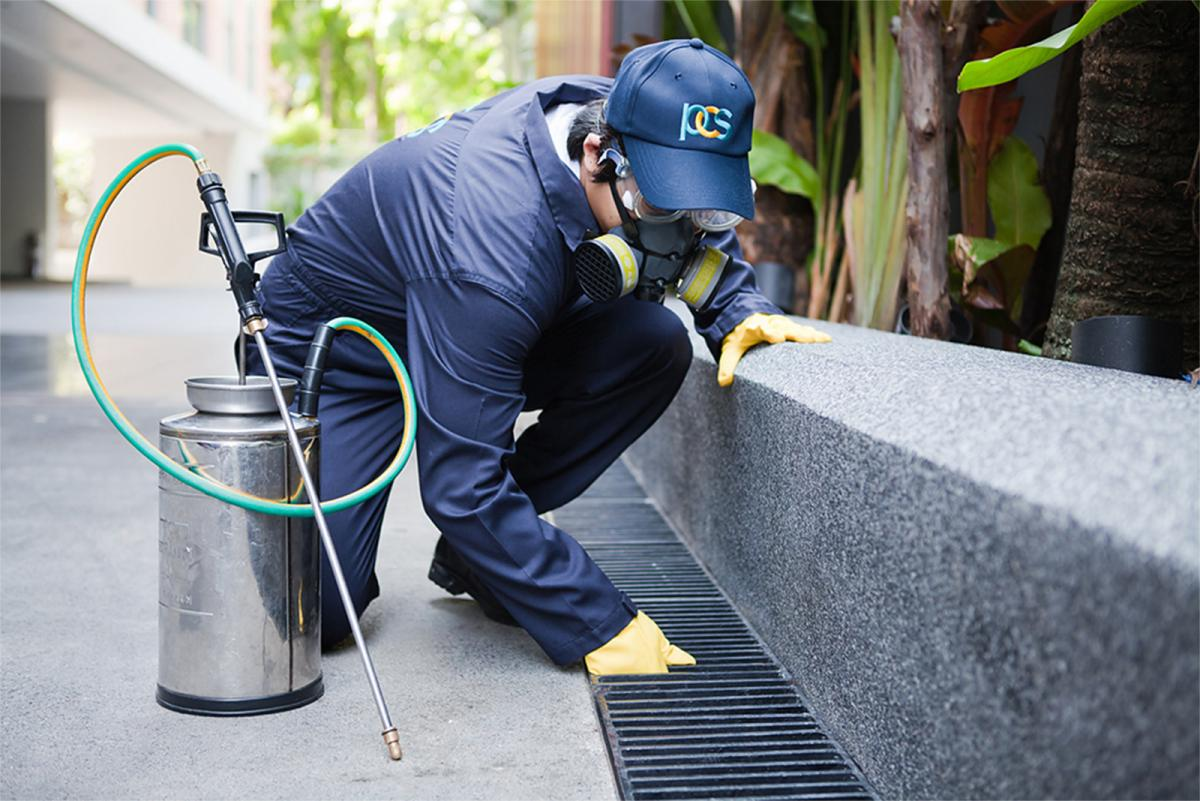 Why hiring professional exterminators for local ant control?