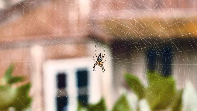 Simple handy steps to keep spiders out of your house