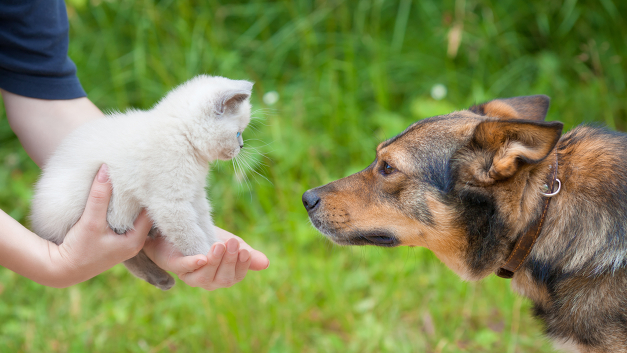 3 Ways to Love Your Dog or Cat